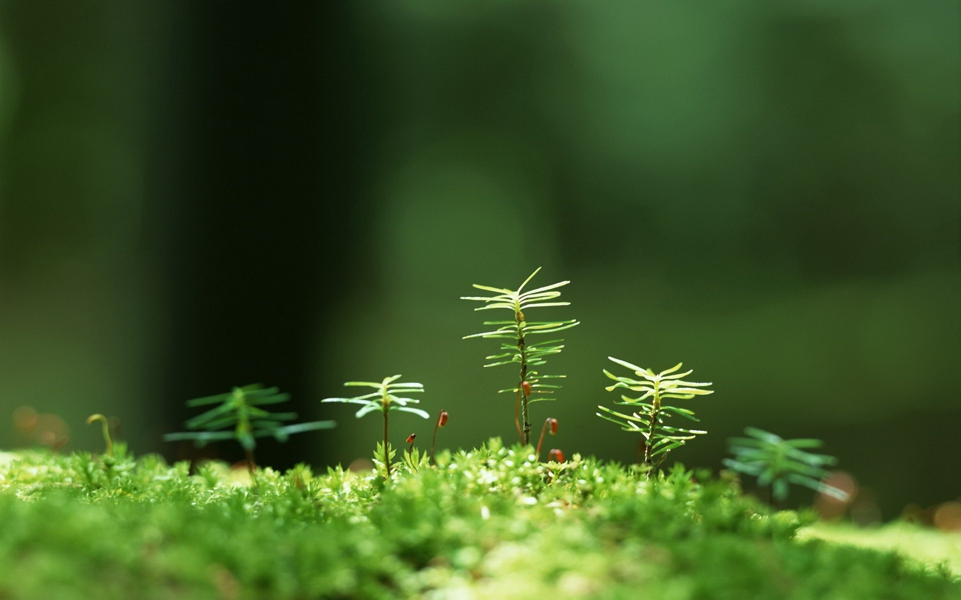 cute-backgrounds-small-nature-plant-611662