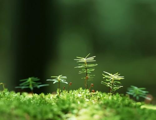 Informace veřejnosti pro přístup do lesů